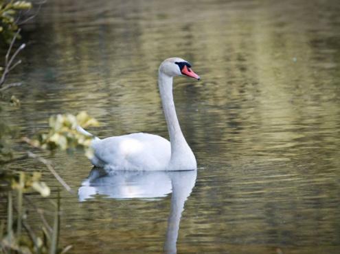 Озеро Луки: в мережі з'явилися неймовірні знімки